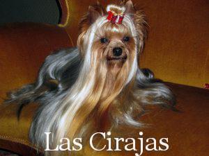 Multi CH. Armani de Las Cirajas